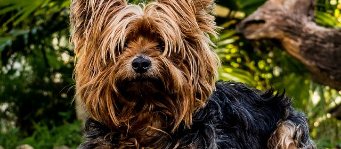 טיפולים קוסמטיים לכלבים